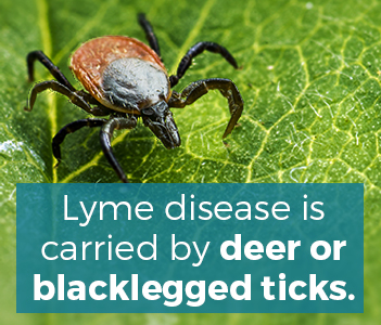 What is Lyme Disease & How Can It Cause Joint Pain - OIP